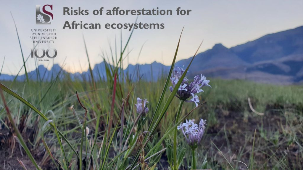 Risks of afforestation for African ecosystems